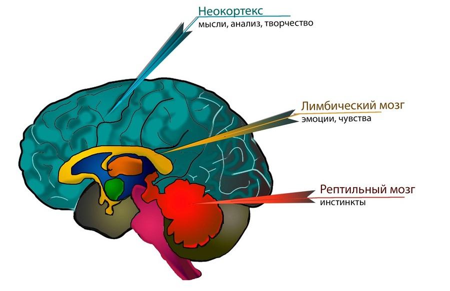 три-мозга.jpg