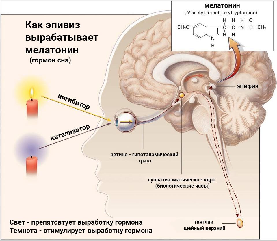 shema-epifiz-melatonin.jpg