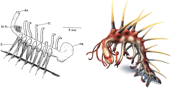 hallucigenias_head_-and_the_pharyngeal_armature_of_early_ecdysozoans_fig1_600.jpg